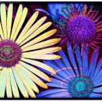 Floral-Morning-1